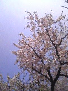 春、るるる